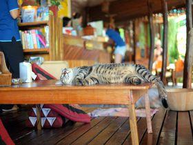猫までゆるり。タイの離島・タオ島で心も身体も癒される島旅
