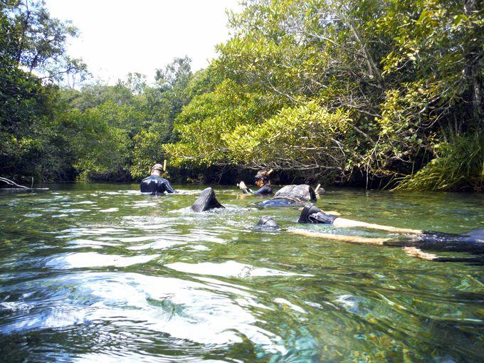 ボニートで1番人気!プラタ川での川下りツアー