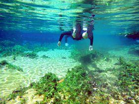 驚異の透明度!ブラジル・ボニートで大自然のアクアリウムを体感
