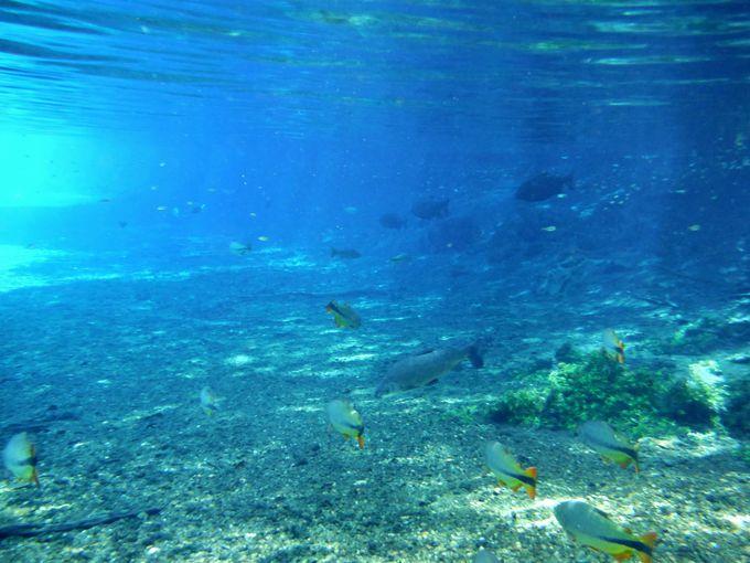 天然のアクアリウムで魚と水中散歩