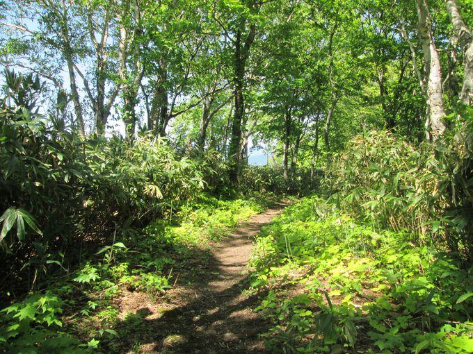木漏れ日の中を歩いて身も心もリフレッシュ