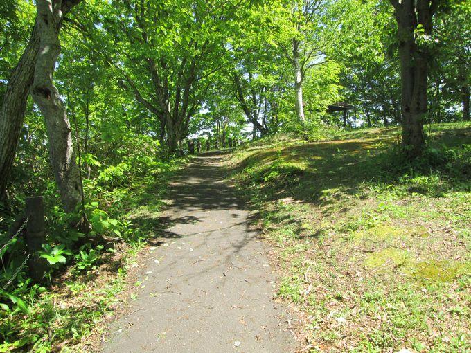 天狗山の森林浴コースを歩こう