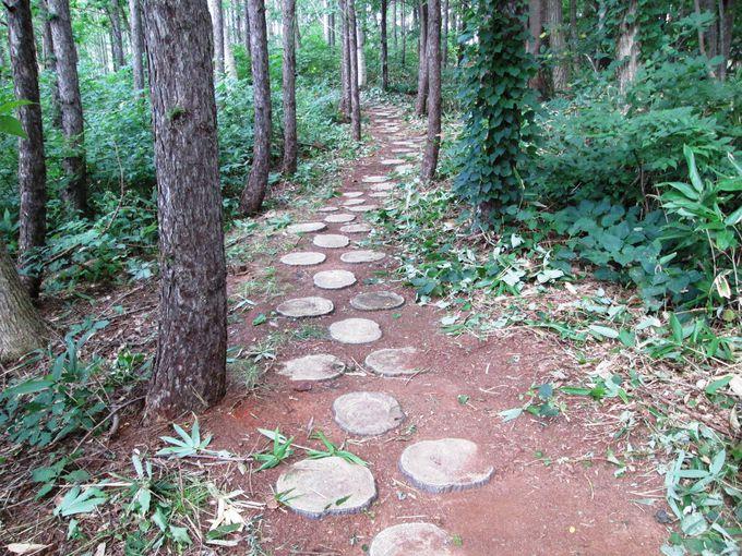 森の中を抜けた先にある史跡「西崎山環状列石」