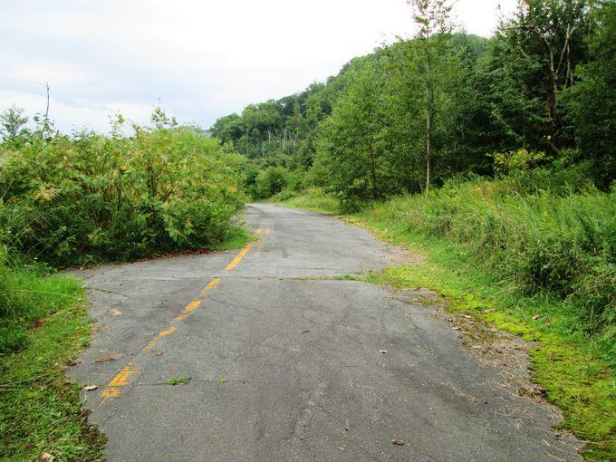 森の中の森林浴と使われなくなった旧国道230号線