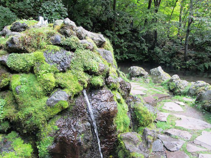 蝦夷富士「羊蹄山」から長い年月をかけて湧いた水が作る風景