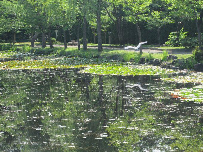市街地に残る自然豊かな景勝地「玉泉館跡地公園」