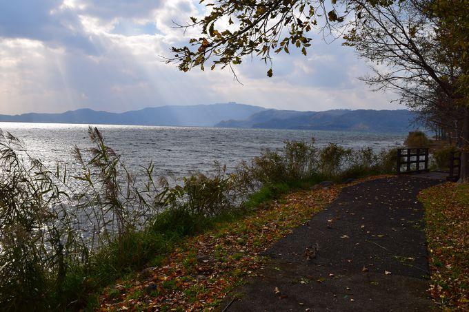 湖畔の樹木の間を歩く水辺の小径「財田自然観察道」