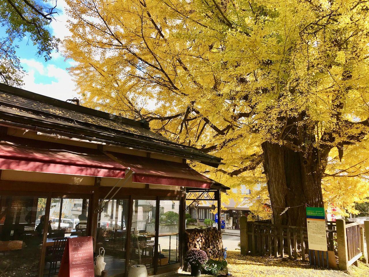 熊野大社のお参りと併せて訪れたいナチュラルカフェ