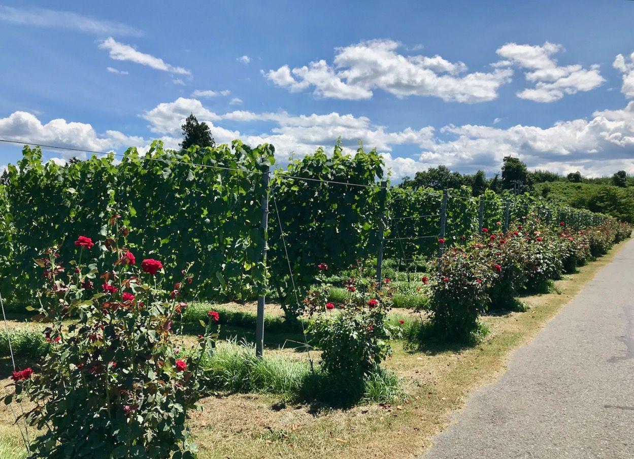 お花と緑の美しいワイナリー