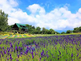 なんて可愛いの〜!山形のラベンダー畑「玉虫沼農村公園かおりの広場」