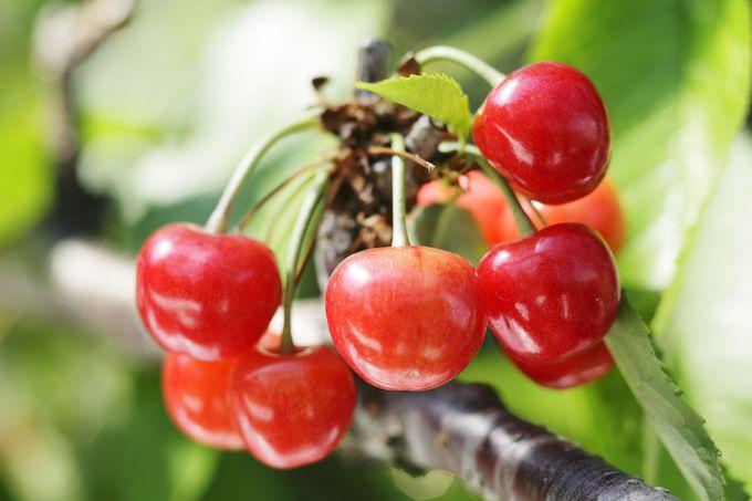 果物狩りの情報を1年中らくらくゲット!