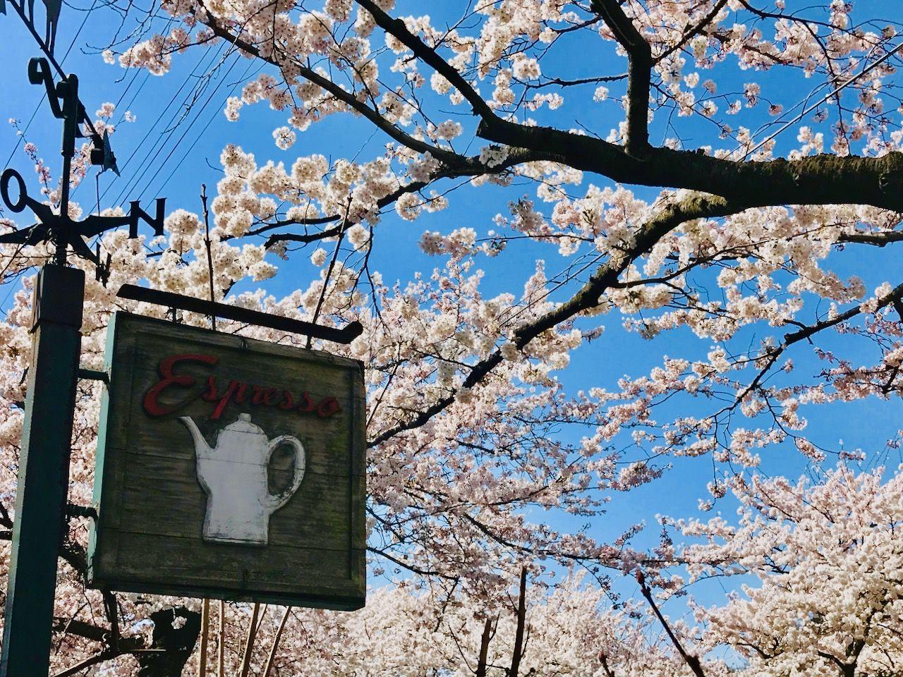 """山形のお花見スポット""""馬見ヶ崎さくらライン""""沿いにあるカフェ"""
