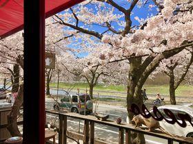 桜咲く山形のカフェ「Espresso」で四季を愛でる