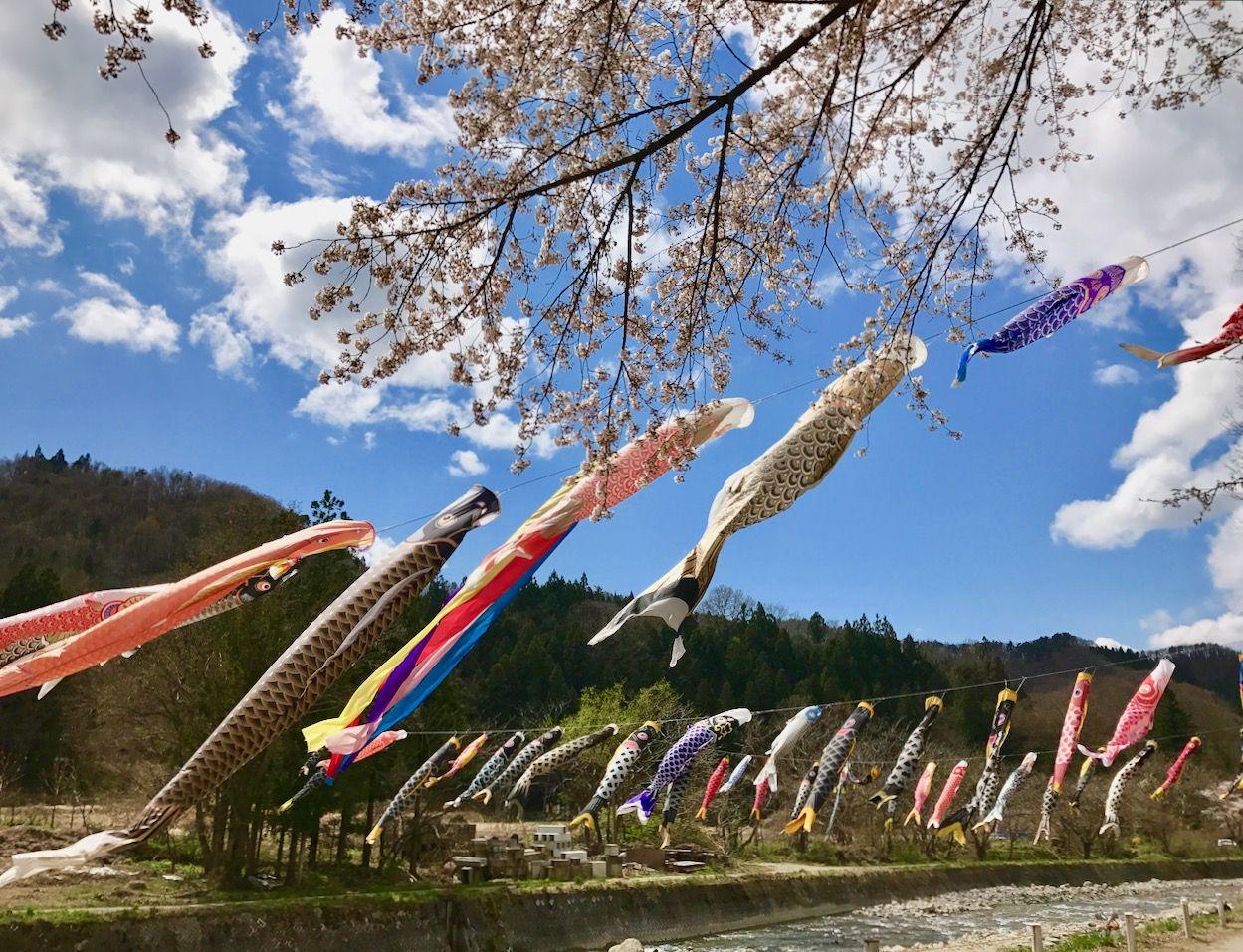 清流と桜・鯉のぼりと過ごす、の〜んびり春日和