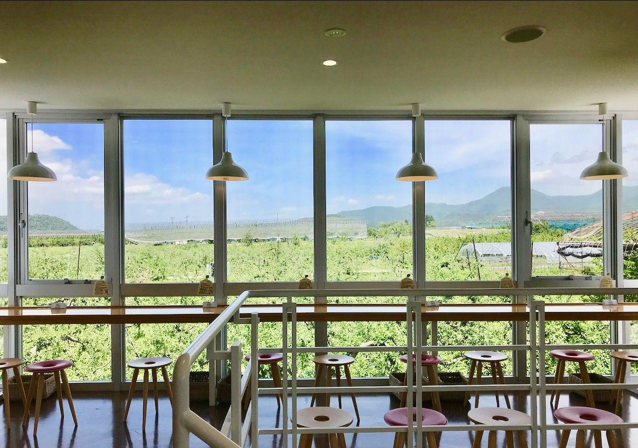 季節折々の果物畑を眺められる果樹園カフェ