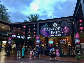 夜のシンガポール動物園はファンタジーの世界!RAINFOREST LUMINA