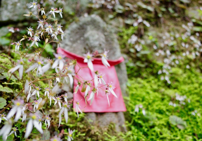 夏の宝珠山立石寺「山寺」は煌めく緑の世界