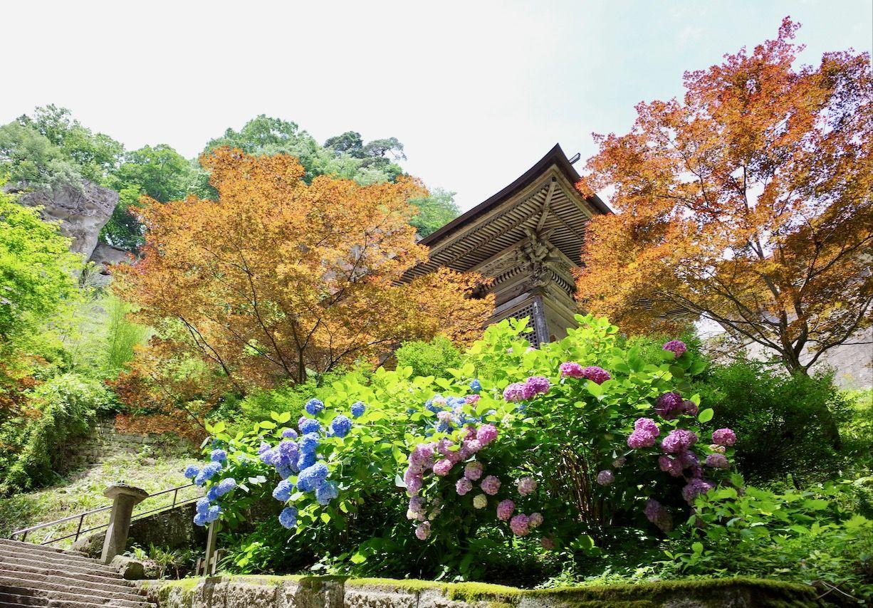 「山寺」の紫陽花スポット、おすすめは2カ所