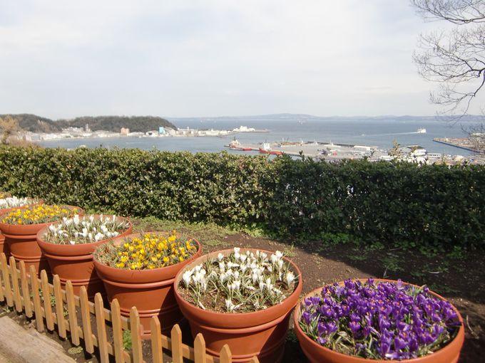 花と海を満喫する「くりはま花の国」