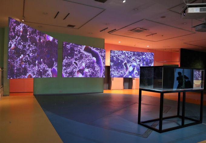 科学技術とアートの融合:イシャム・ベラダ