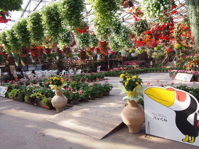 一年中楽しめる!花と鳥の楽園「松江フォーゲルパーク」