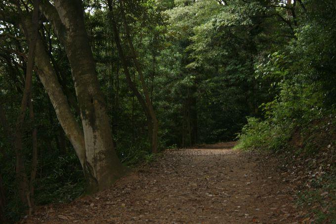 森の中の遊歩道は森林セラピーを満喫できるパワースポット