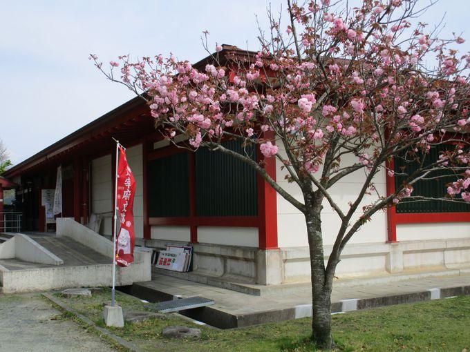 「大宰府政庁跡」の一画にある「大宰府展示館」