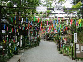 願かけ風鈴が風に揺れて荘厳な音を奏でる福岡県田川市「三井寺」