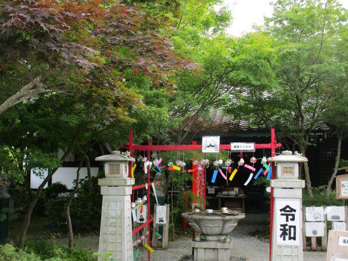 秋は紅葉の名所としても知られる「三井寺」