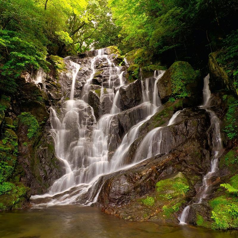 県の名勝「白糸の滝」は、福岡の夏の風物詩