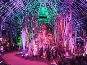 光と影が織り成すアート空間!山口県「世界を旅する植物館」