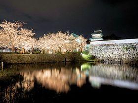 「福岡城さくらまつり」夜桜5選!2019年も舞鶴公園で開催