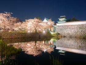 「福岡城さくらまつり」夜桜5選!2020年も舞鶴公園で開催