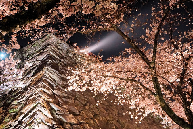「天守台」は福岡市の夜景&桜が同時に楽しめる!