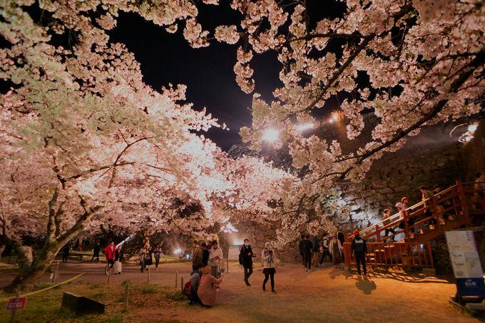 「桜園」のライトアップはロマンチック!