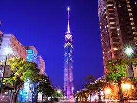 福岡タワーに輝く夜桜!「さくらイルミネーション」開催