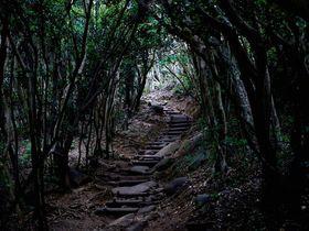 糸島のトトロの森!芥屋の大門公園はまるでジブリの世界