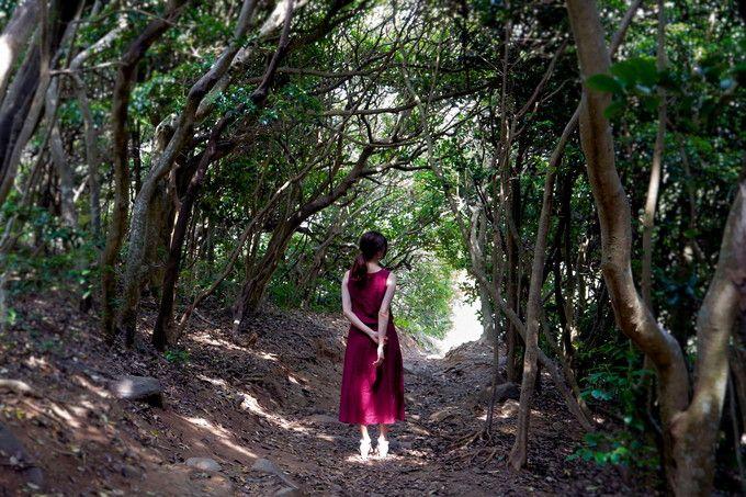 ジブリファンならずとも必見!「糸島のトトロの森」