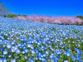 福岡「海の中道海浜公園」は春がおすすめ!花畑が超SNS映え