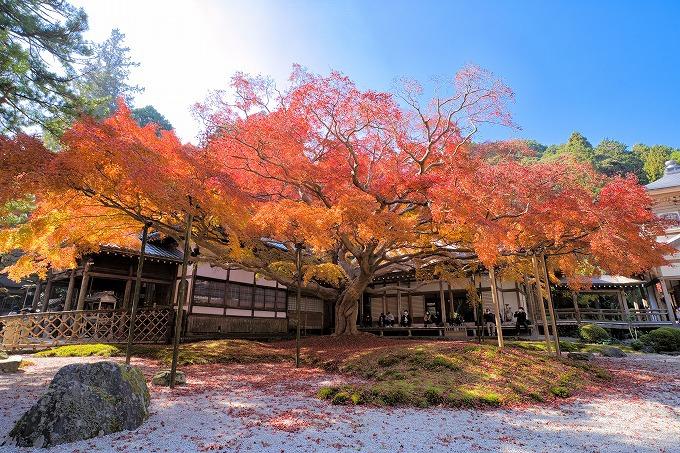 福岡県随一の紅葉!雷山千如寺大悲王院の大楓