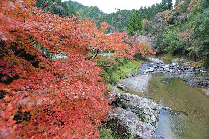 和歌山県「やどり温泉 いやしの湯」で四季折々の豊かさを楽しもう!