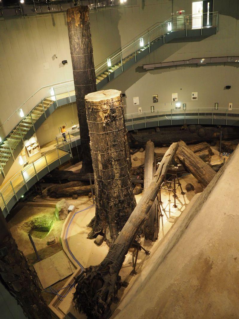 島根・石見「三瓶小豆原埋没林公園」で4000年前の太古の森へ還る!
