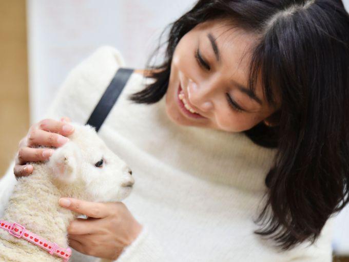 悶えるほどかわいい赤ちゃん羊がたくさん!