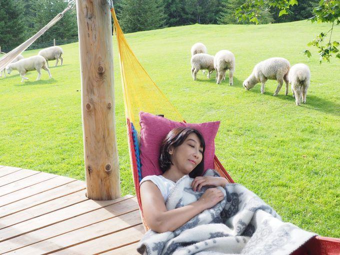 かわいいもこもこ羊たちと!「羊とお昼寝ハンモック」