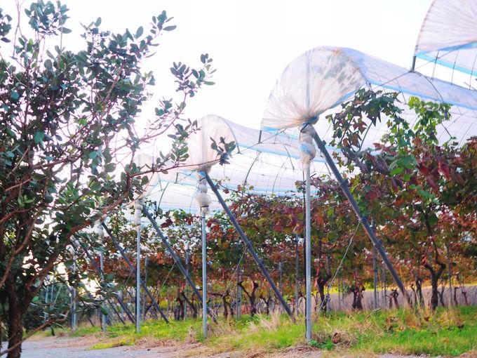 宇佐「安心院葡萄酒工房」は杜の中のワイナリー