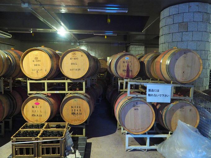 工場見学で安心院ワインのおいしさのヒミツを探る!
