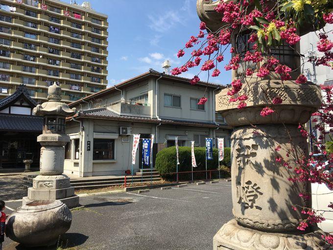 幾多の災難をくぐり抜け、徳川藩の祈願所となった「七寺」