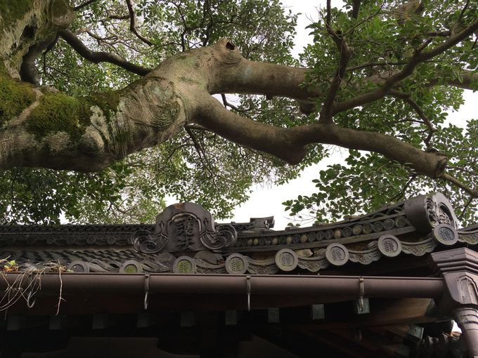 巨木の隣に祀られる「護法大権現」とは