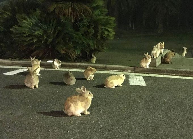 700羽の野生ウサギに囲まれる癒しの島として大人気