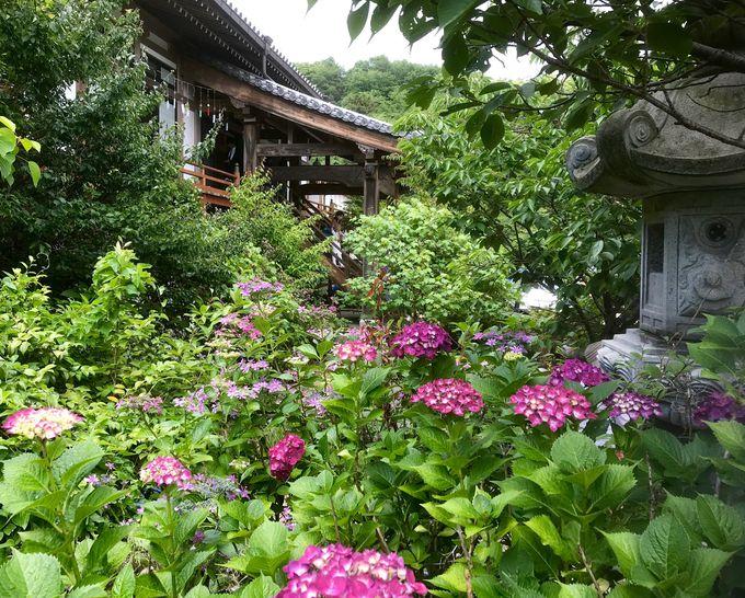 観音台団地上の花暦の寺